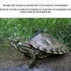 La Louisiana rifiuta di proteggere le tartarughe d'acqua dolce