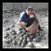 Intercettato un mega carico di tartarughe bracconate