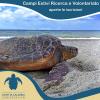 Campi volontariato per le tartarughe marine in Calabria