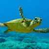 Nuovo progetto siculo per la salvaguardia delle tartarughe