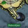 Prolasso del pene nelle tartarughe