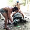 Polemiche contro Dan Bilzerian dopo la foto con la tartaruga