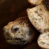 Due grosse tartarughe arrivate allo Zoo di El Salvador