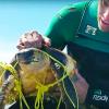 Filmmakers si tuffano e salvano una tartaruga impigliata