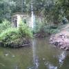 """Tartarughe morte nel laghetto del Parco """"Stibbert"""" (FI)"""