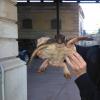 Piccola tartaruga marina recuperata nel siracusano
