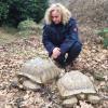 Trovate morte a Lecco due grosse tartarughe terrestri africane