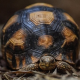 Per la prima volta in Inghilterra in mostra tartarughe rare