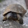 Appello per la tartaruga-mascotte Clementina: è alimentata male