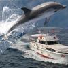 Le escursioni in Liguria tra tartarughe marine e delfini