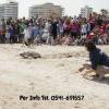 Fondazione Cetacea: Pasquetta con le tartarughe marine