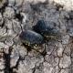Perth: 60 uova fertili della rara tartaruga australiana