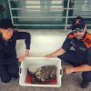 Tartaruga marina recuperata a Roccella Jonica (RC)