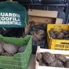 Sorpresi a vendere 171 tartarughe terrestri senza documenti