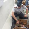 """Fermato al porto di Genova con 24 """"Testudo graeca"""" in auto"""
