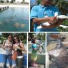 Cayman Turtle Farm: proteste per i selfie con le tartarughe