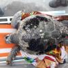 Due tartarughe marine spiaggiate tra venerdì e sabato