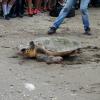 Fondazione Cetacea: giornata di rilasci e pulizia spiagge