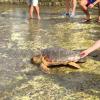 """Rilascio di una tartaruga con gli studenti del """"Crispi"""" (RG)"""