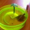 Salmonella trasmessa da una tartaruga ad un bimbo di tre mesi