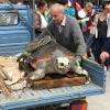 """Due carcasse di """"Caretta caretta"""" trovate in Liguria"""