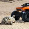 Un videogioco online per salvare le tartarughe del deserto