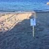 Continuano le deposizioni di tartarughe marine in Calabria