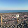 Palizzi (RC): ritornano a deporre le tartarughe marine