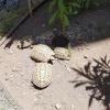 Negoziante denunciato per maltrattamento di tartarughe