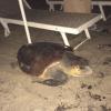 Uomo sorpreso a scavare nel nido di tartaruga marina