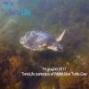 """Tre giorni d'eventi per il """"World Sea Turtle Day"""""""