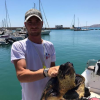 Tartaruga marina salvata dai ragazzi del club velico (KR)