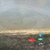 Un nuovo cattivo gioco ad Arezzo: pesca la tartaruga!
