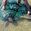 Due grosse tartarughe marine salvate al largo di Cagliari