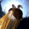 Trump cancella la norma che protegge le tartarughe marine