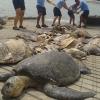 Costa Rica: quattro arresti per caccia alle tartarughe marine