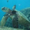 Per la prima volta riprodotta in lab pelle di tartaruga