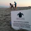 """Due nuovi nidi di """"Caretta caretta"""" sulle spiagge calabre"""