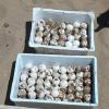 Mareggiata porta alla luce un nido di tartaruga a Sciacca
