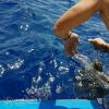 Tartaruga marina recuperata allamata ad un palangaro