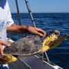 Cena per le tartarughe marine con la Fondazione Cetacea