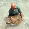 Tartaruga marina salvata dai bagnanti a Noto (SR)