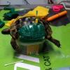 A Lecce il primo intervento con stampa 3D su una tartaruga