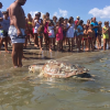 Altre due tartarughe marine morte nel Mar Adriatico