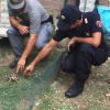 Uomo denunciato per possesso di tartarughe senza documenti