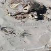 Tartaruga giace in decomposizione da 9 giorni a Termoli (CB)
