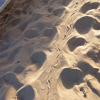 Altri tentativi di nidificazione delle tartarughe in Cilento