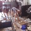 Cani e rettili abbandonati in un appartamento di Torino