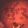 Nate le prime tartarughe marine dal nido di Eboli (SA)