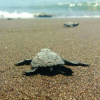 Turisti bloccati a Zante per colpa delle tartarughe marine
